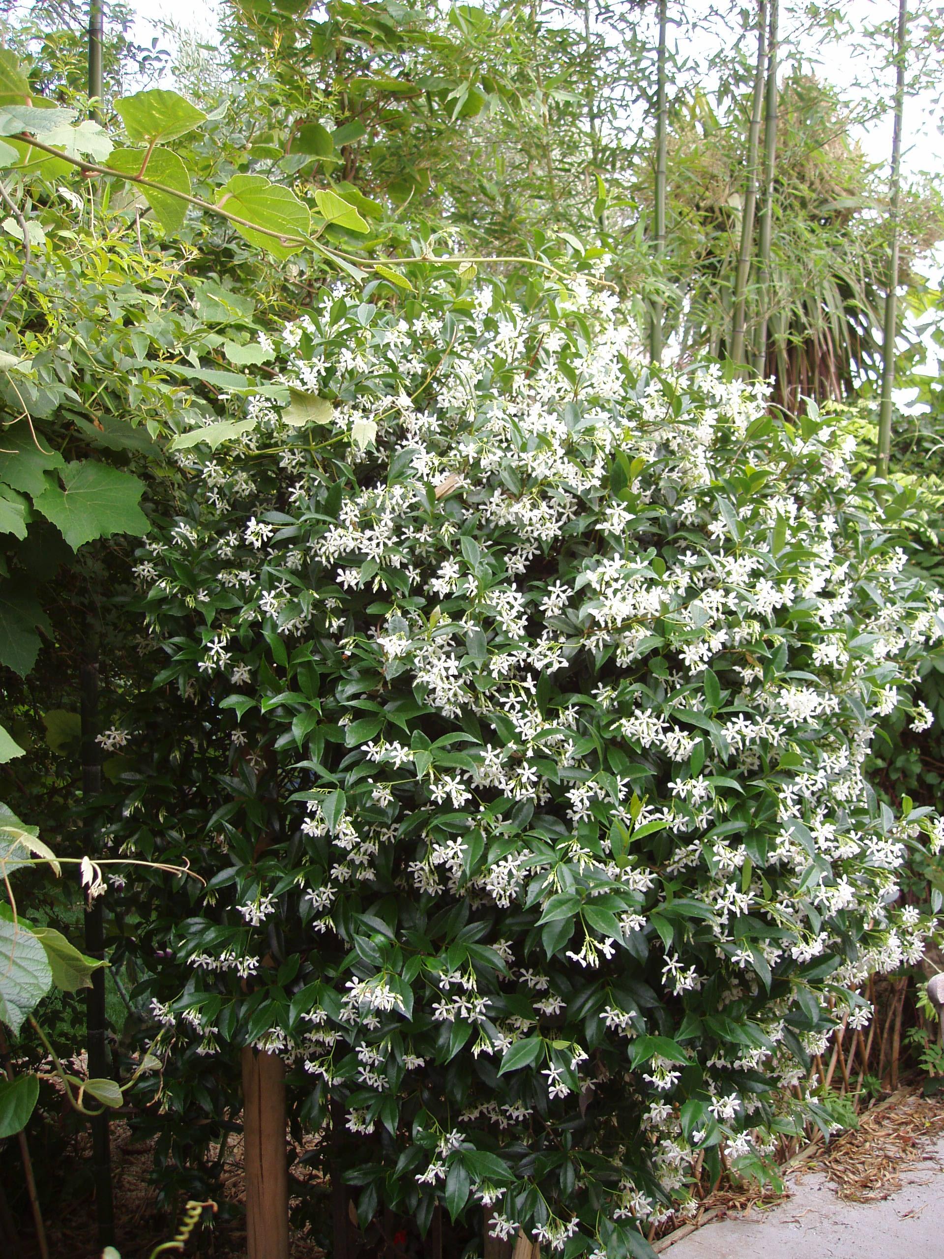 St phane guillot p pini res cr ation de jardins for Vente plantes artificielles tunisie